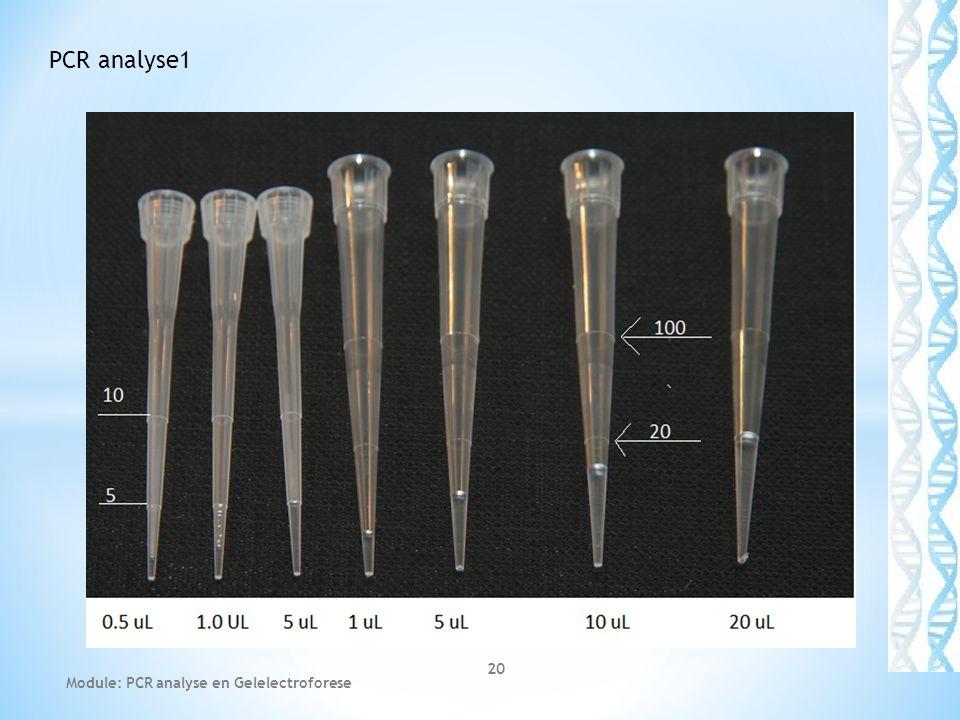 PCR analyse1 Module: PCR analyse en Gelelectroforese
