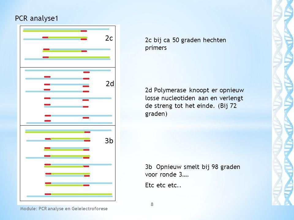PCR analyse1 2c bij ca 50 graden hechten primers