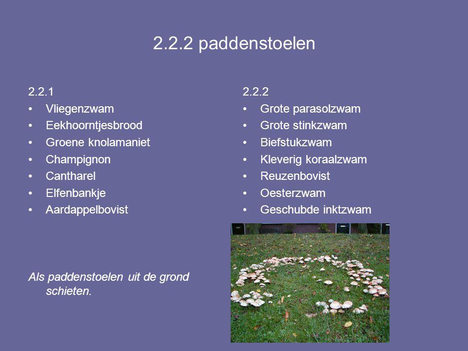 2.2.2 paddenstoelen 2.2.1 Vliegenzwam Eekhoorntjesbrood