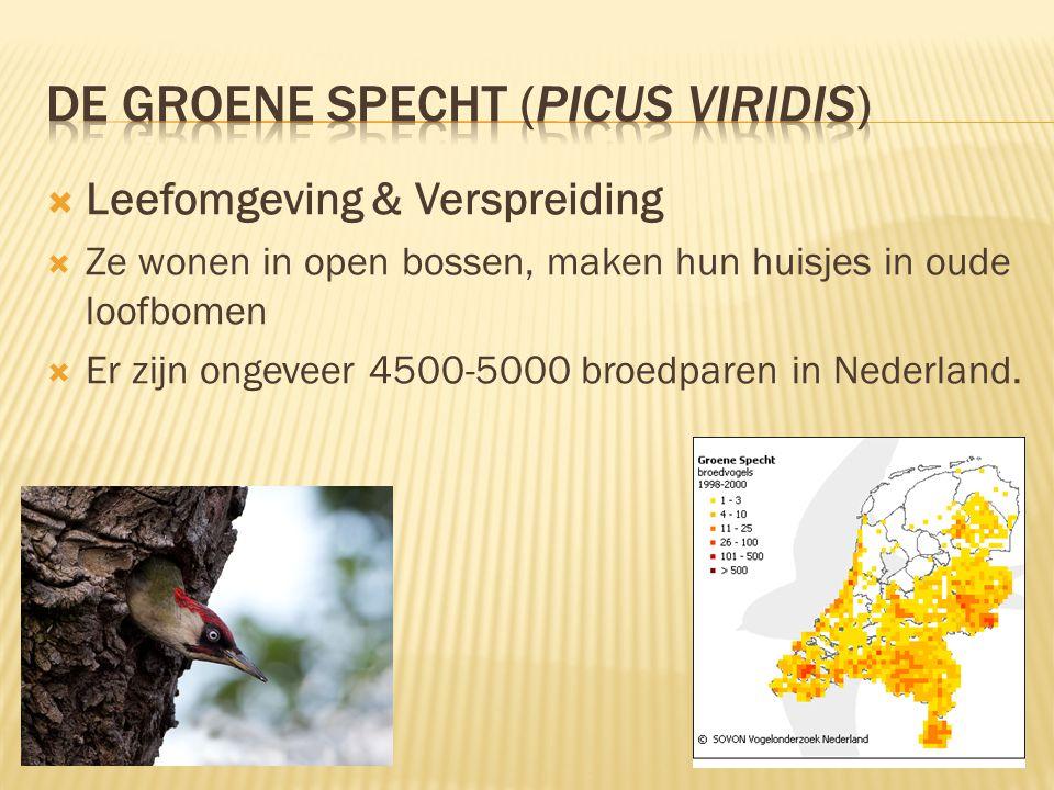 De groene specht (Picus viridis)