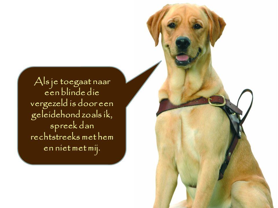 Als je toegaat naar een blinde die vergezeld is door een geleidehond zoals ik, spreek dan rechtstreeks met hem en niet met mij.
