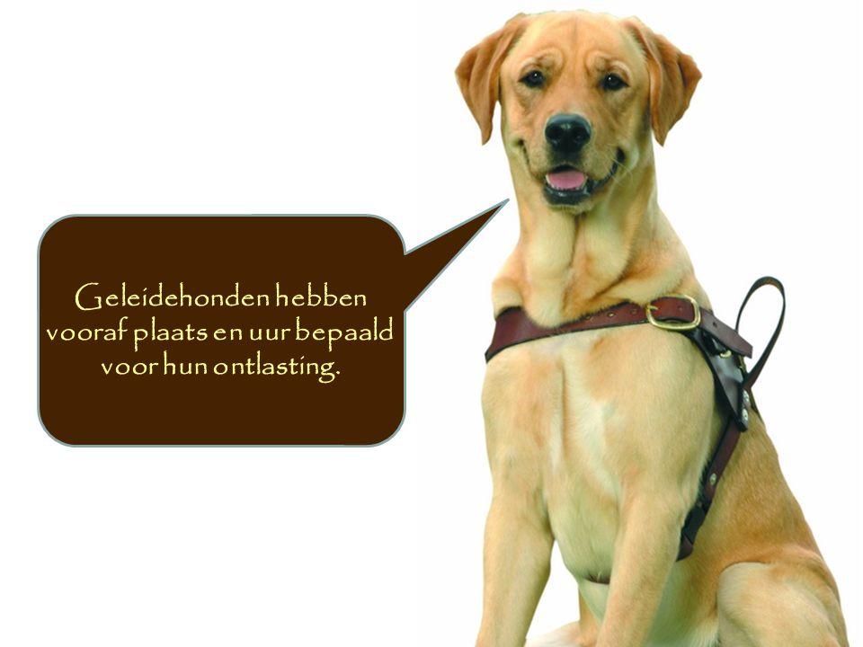 Geleidehonden hebben vooraf plaats en uur bepaald voor hun ontlasting.