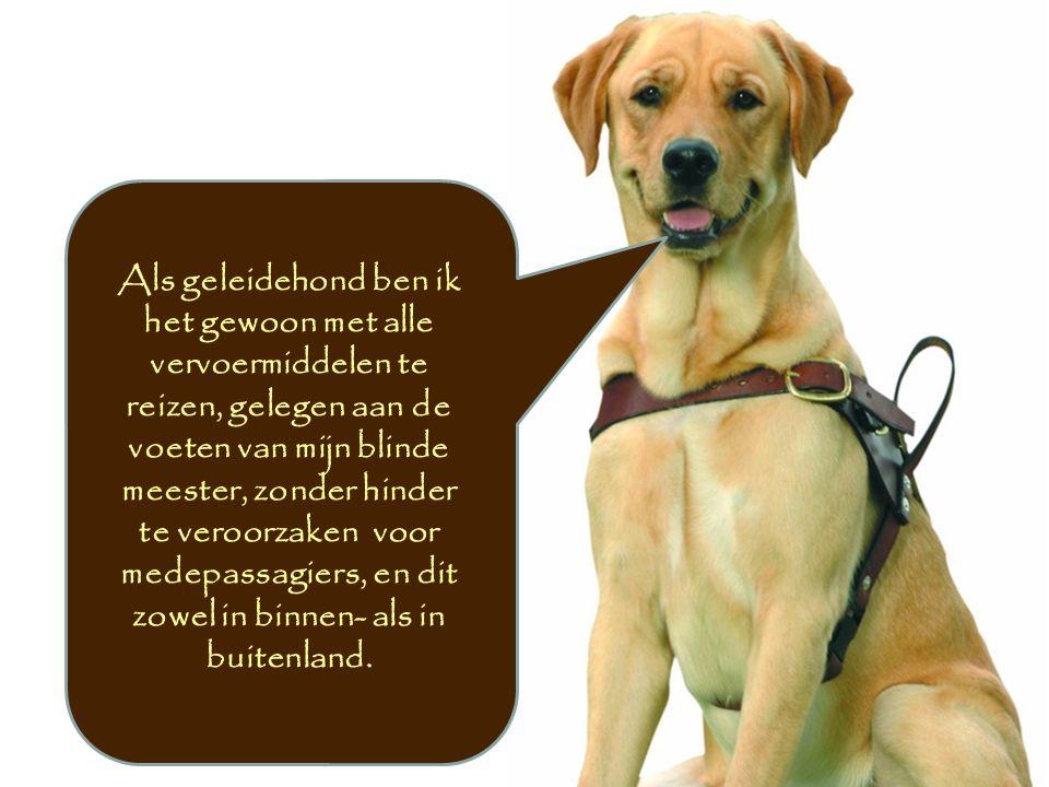 Als geleidehond ben ik het gewoon met alle vervoermiddelen te reizen, gelegen aan de voeten van mijn blinde meester, zonder hinder te veroorzaken voor medepassagiers, en dit zowel in binnen- als in buitenland.