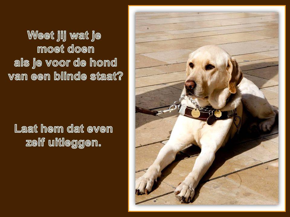 Weet jij wat je moet doen. als je voor de hond. van een blinde staat.