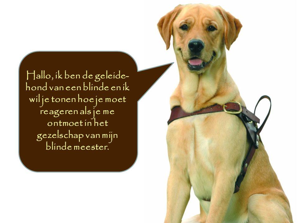 Hallo, ik ben de geleide-hond van een blinde en ik wil je tonen hoe je moet reageren als je me ontmoet in het gezelschap van mijn blinde meester.