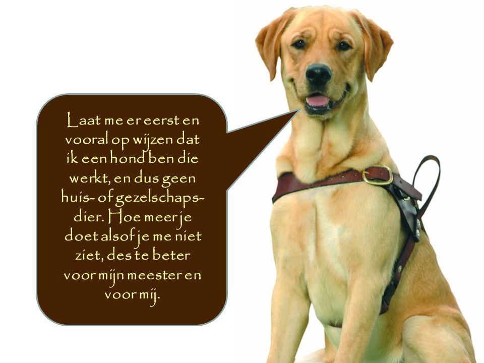 Laat me er eerst en vooral op wijzen dat ik een hond ben die werkt, en dus geen huis- of gezelschaps- dier.