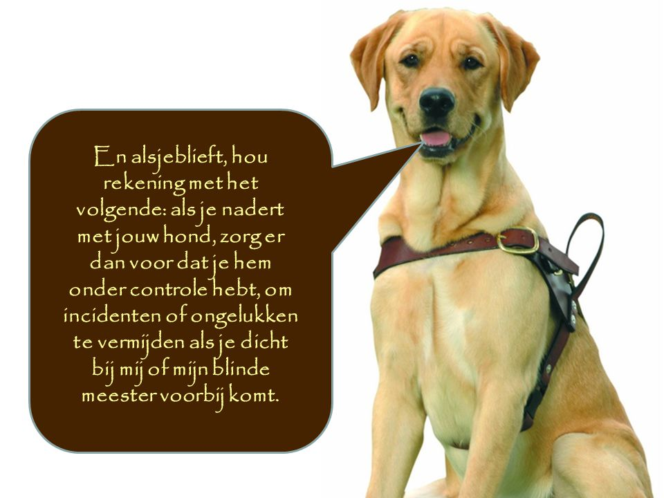 En alsjeblieft, hou rekening met het volgende: als je nadert met jouw hond, zorg er dan voor dat je hem onder controle hebt, om incidenten of ongelukken te vermijden als je dicht bij mij of mijn blinde meester voorbij komt.