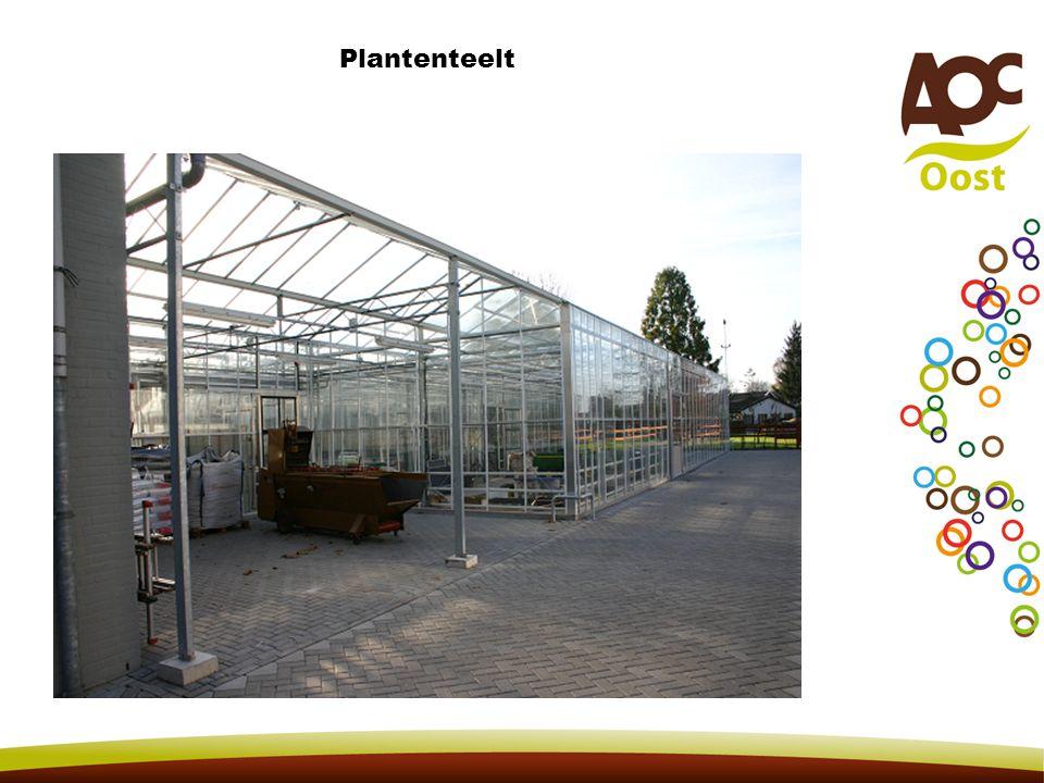 Plantenteelt