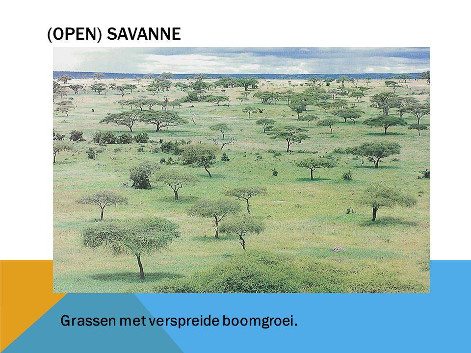 (open) savanne Grassen met verspreide boomgroei.