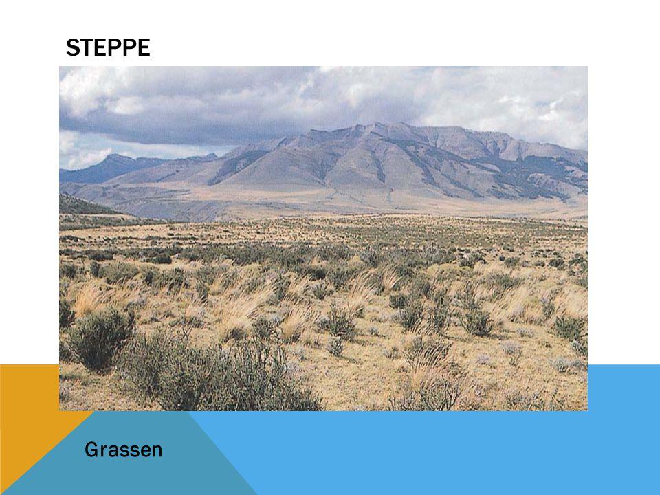 Steppe Grassen