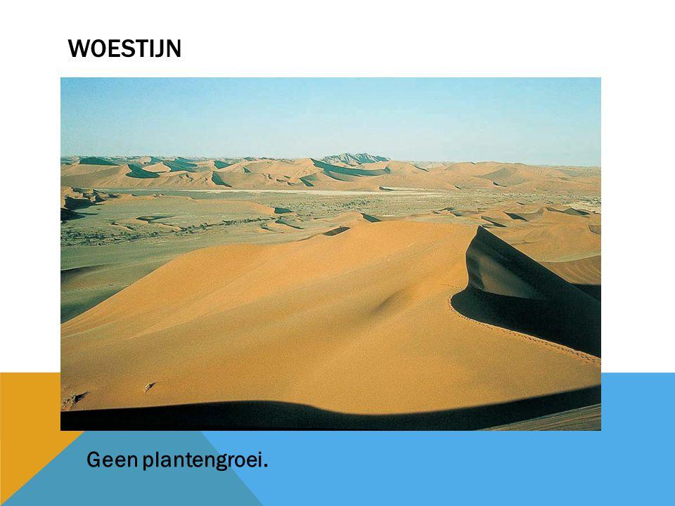 woestijn Geen plantengroei.