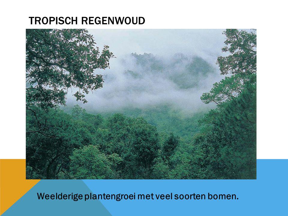 Tropisch regenwoud Weelderige plantengroei met veel soorten bomen.