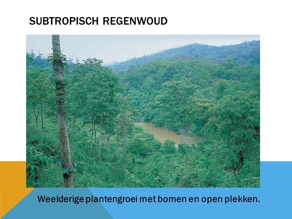 Subtropisch regenwoud