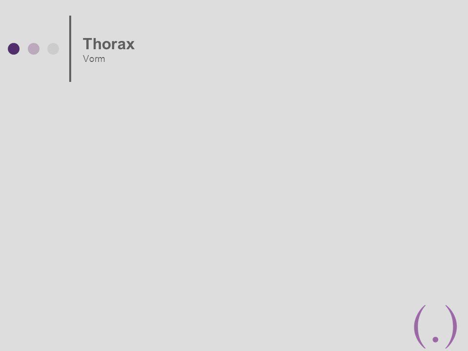 Thorax Vorm