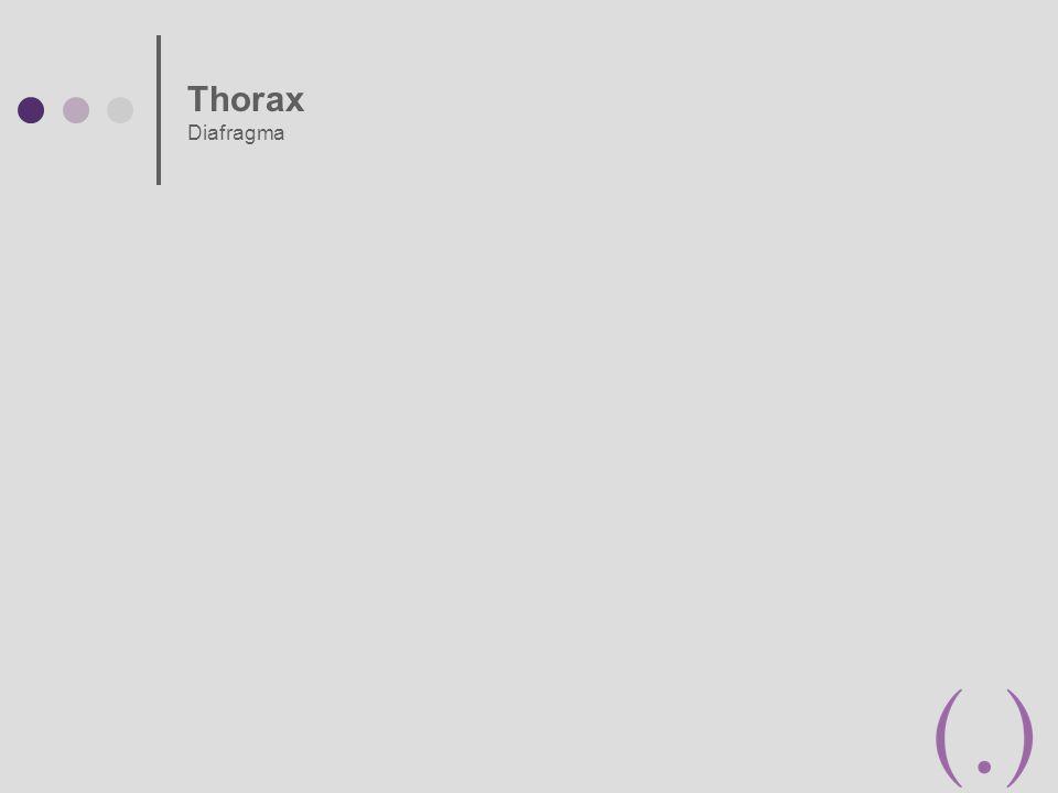 Thorax Diafragma