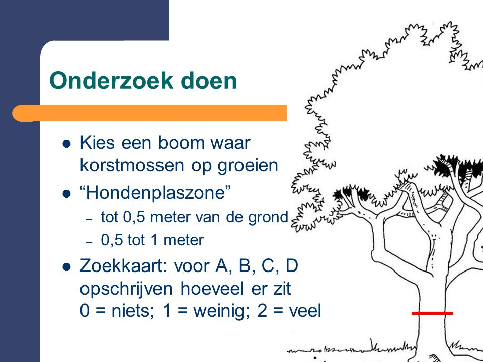 Onderzoek doen Kies een boom waar korstmossen op groeien