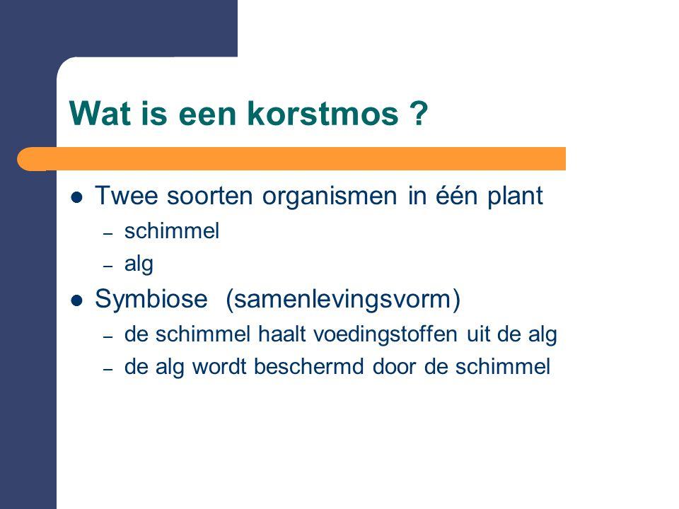 Wat is een korstmos Twee soorten organismen in één plant