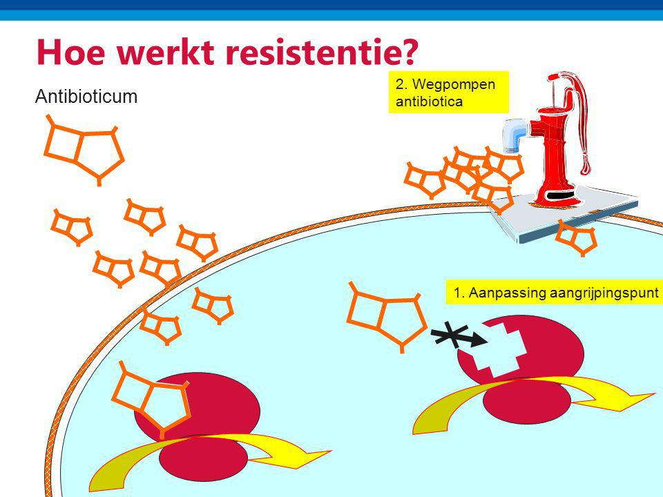 Hoe werkt resistentie Antibioticum 2. Wegpompen antibiotica