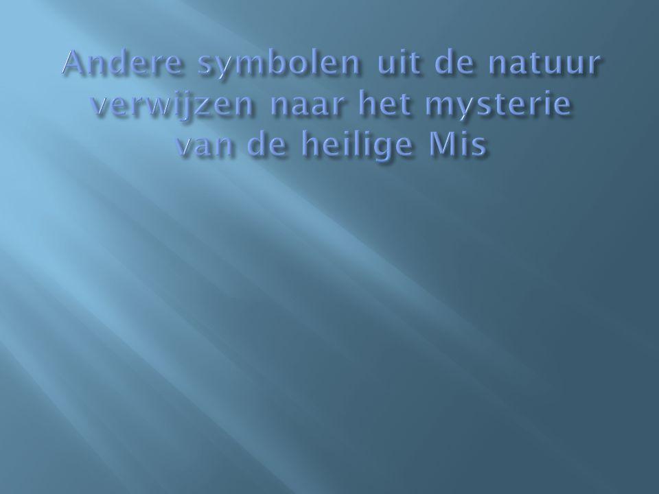 Andere symbolen uit de natuur verwijzen naar het mysterie van de heilige Mis