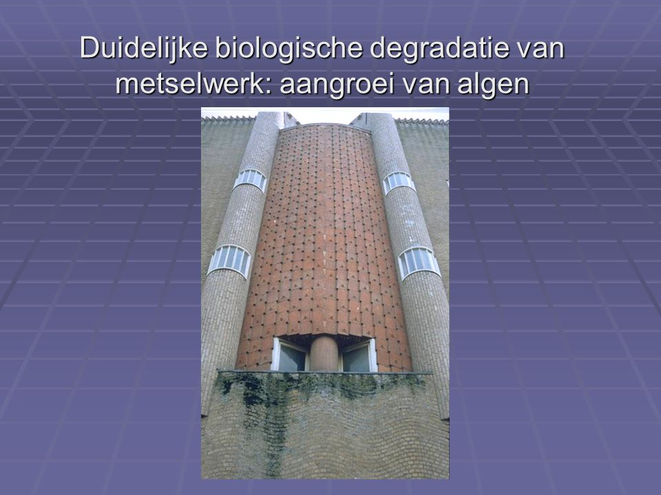 Duidelijke biologische degradatie van metselwerk: aangroei van algen