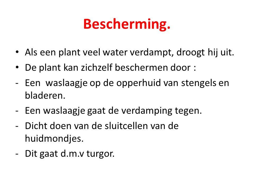 Bescherming. Als een plant veel water verdampt, droogt hij uit.
