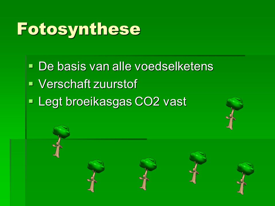 Fotosynthese De basis van alle voedselketens Verschaft zuurstof
