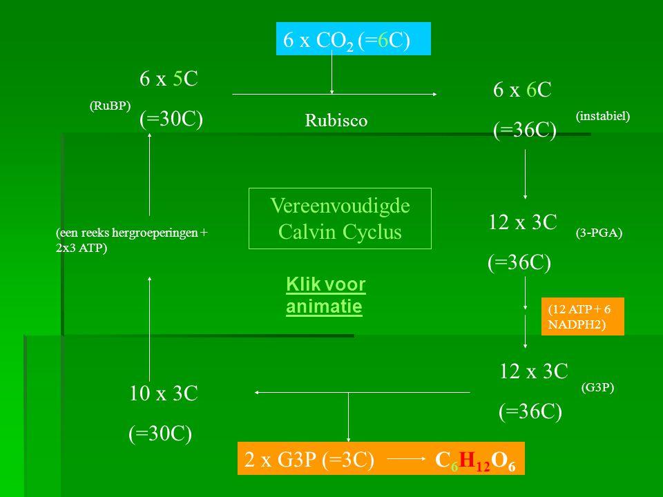 Vereenvoudigde Calvin Cyclus