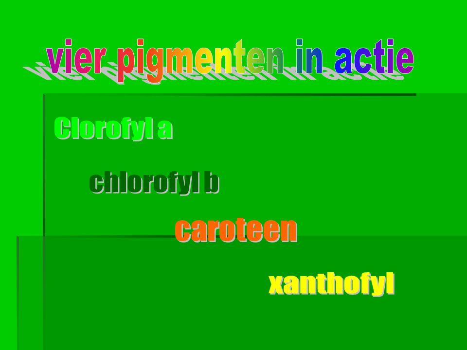 vier pigmenten in actie