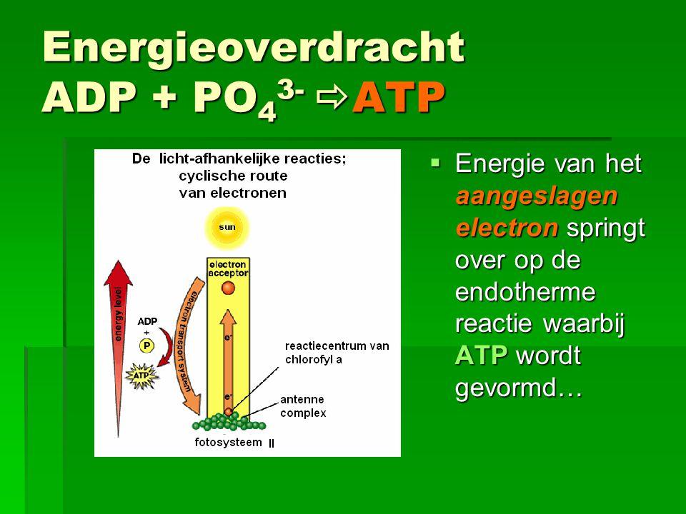 Energieoverdracht ADP + PO43- ATP