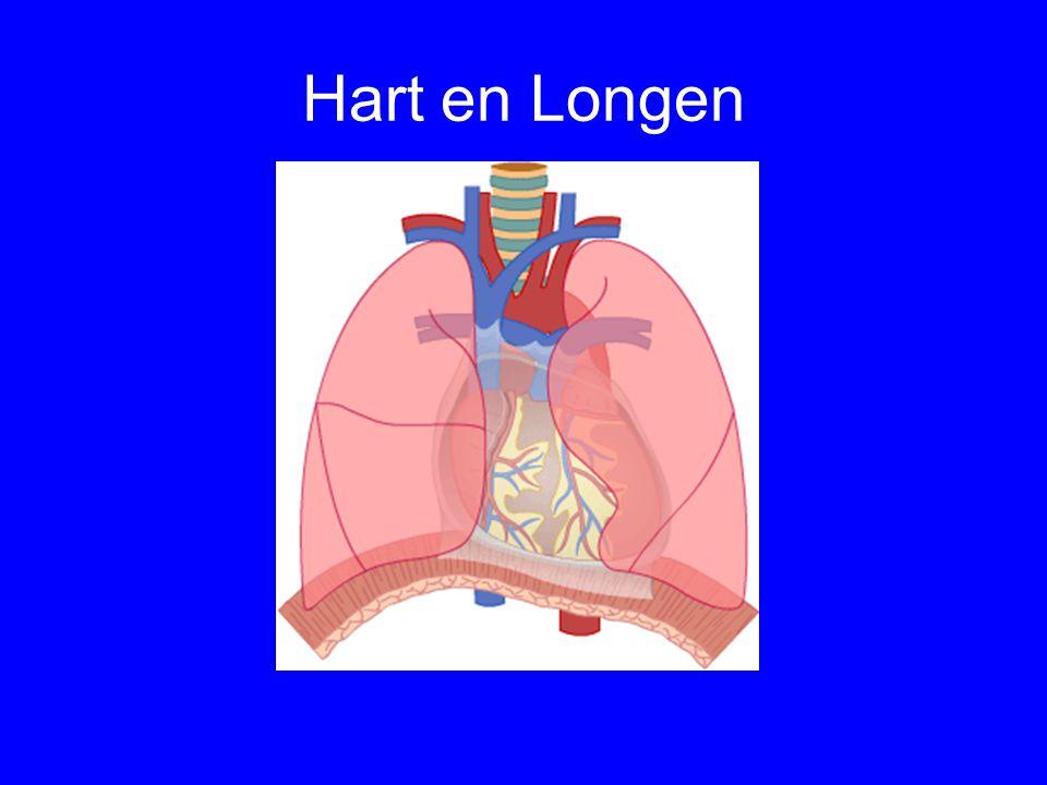 Hart en Longen
