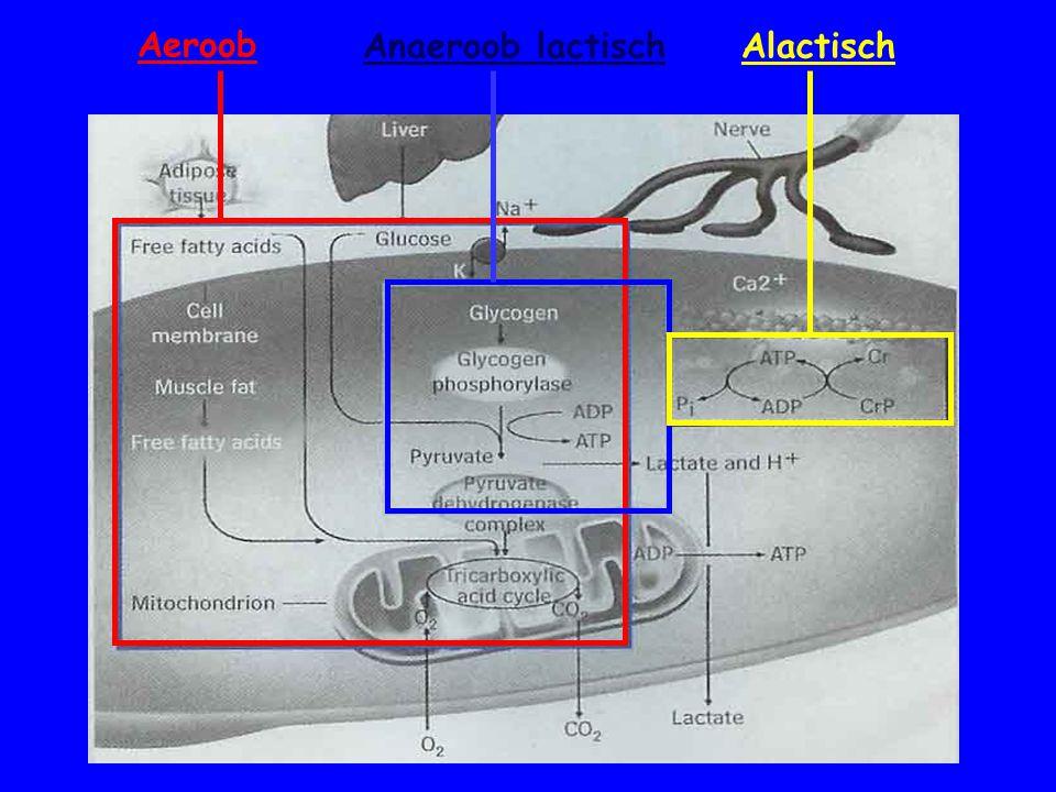 Aeroob Anaeroob lactisch Alactisch