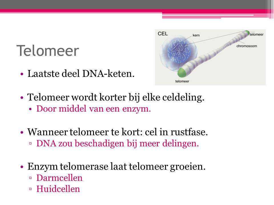 Telomeer Laatste deel DNA-keten.