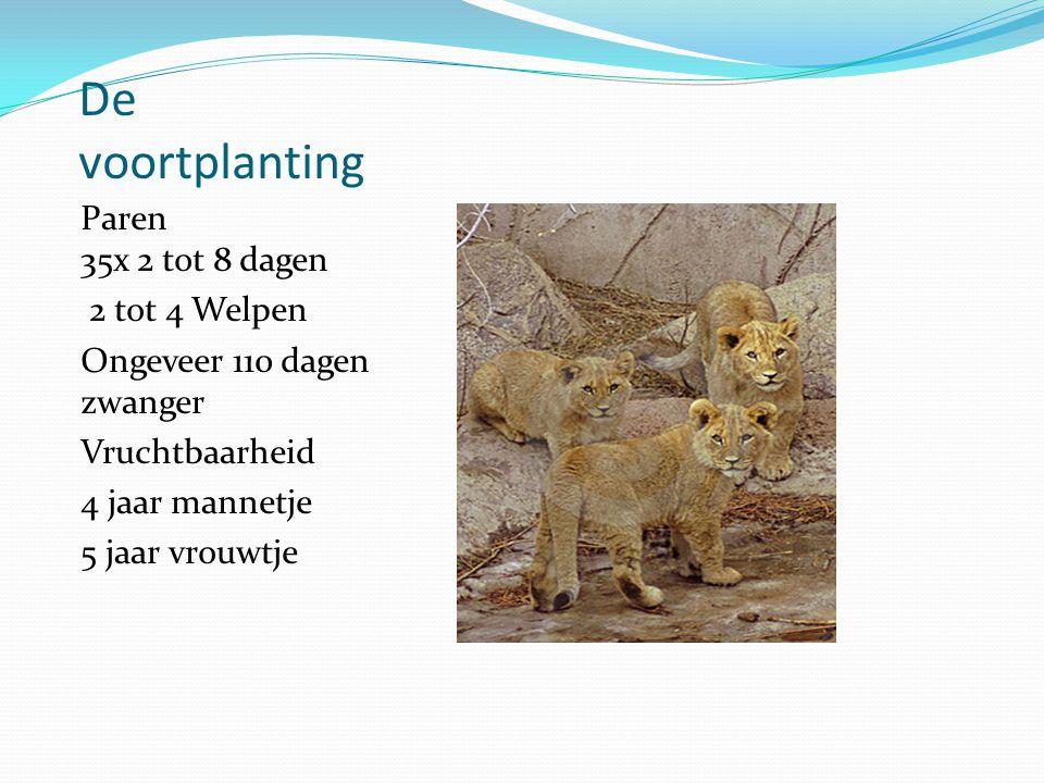 De voortplanting Paren 35x 2 tot 8 dagen 2 tot 4 Welpen