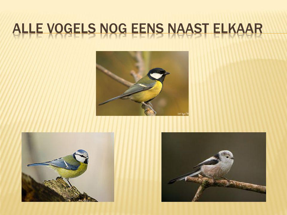 Alle vogels nog eens naast elkaar