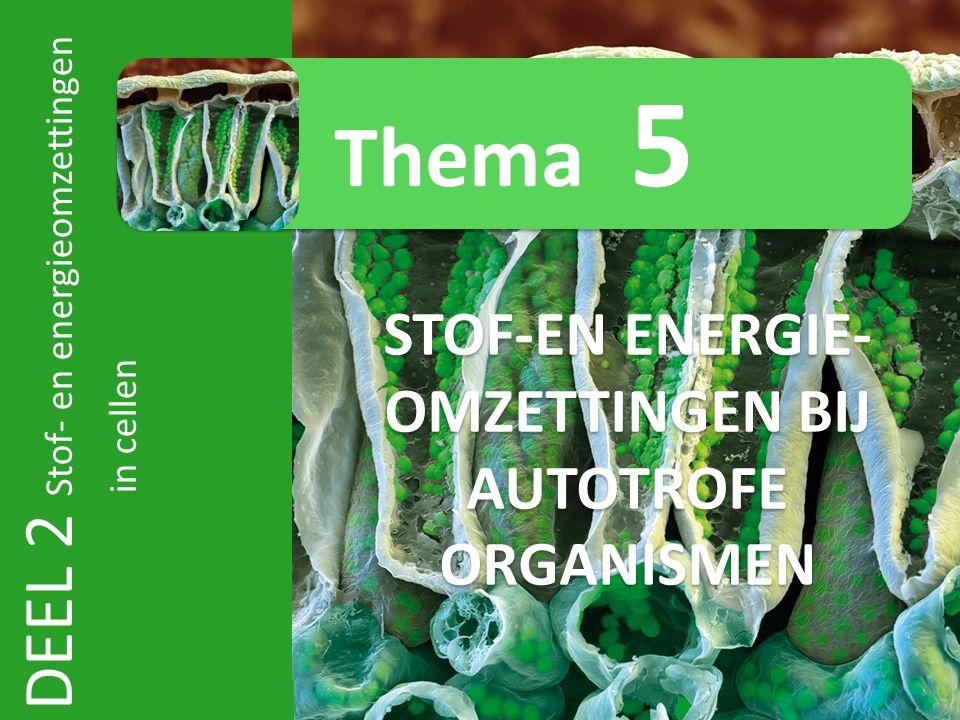 STOF-EN ENERGIE-OMZETTINGEN BIJ AUTOTROFE ORGANISMEN