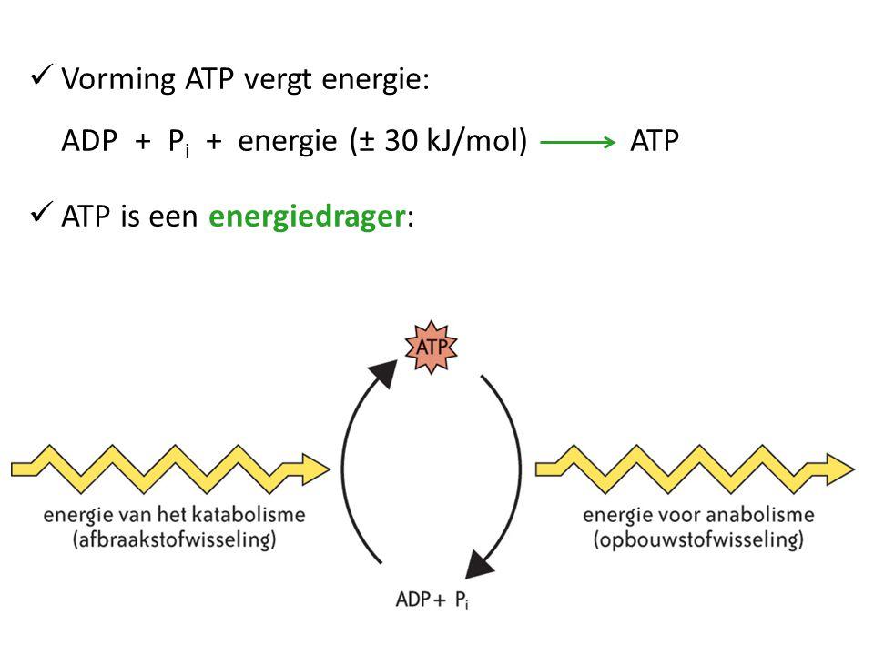 Vorming ATP vergt energie: