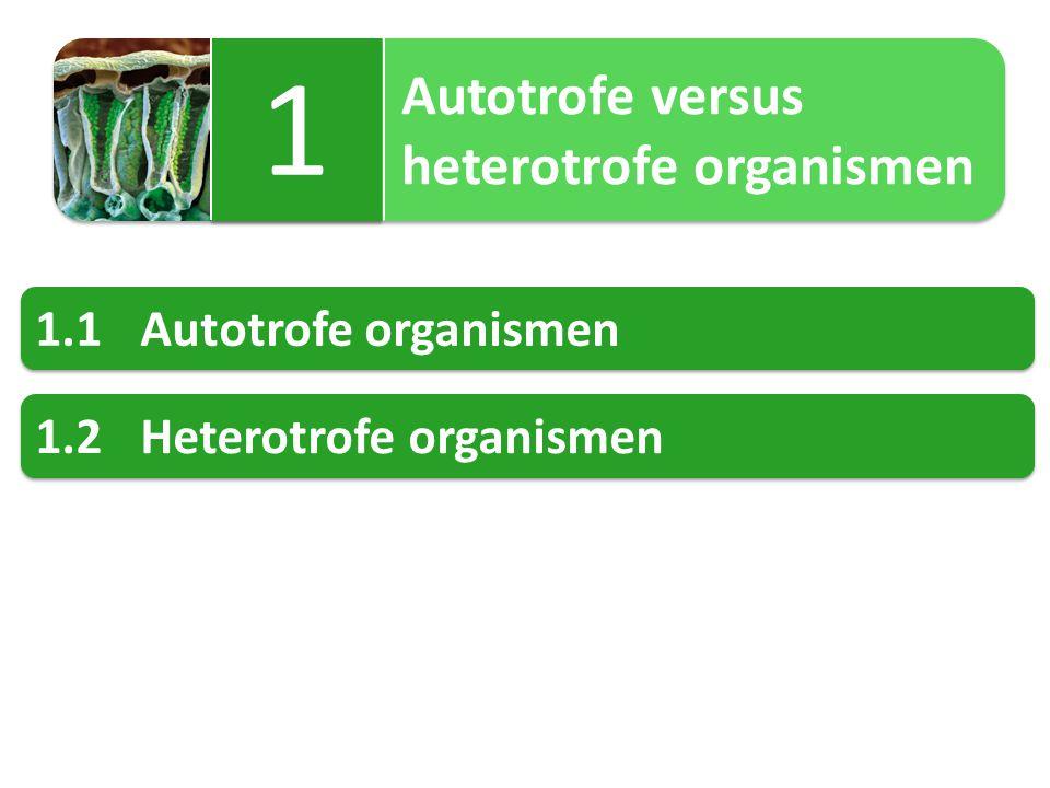 1 heterotrofe organismen 1.1 Autotrofe organismen