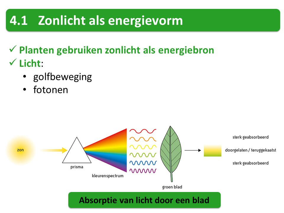 Absorptie van licht door een blad