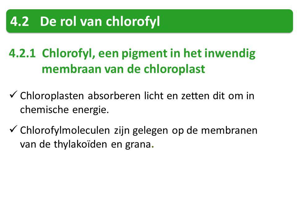 4.2 De rol van chlorofyl 4.2.1 Chlorofyl, een pigment in het inwendig