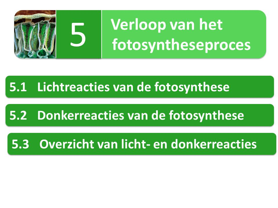 5 fotosyntheseproces 5.1 Lichtreacties van de fotosynthese