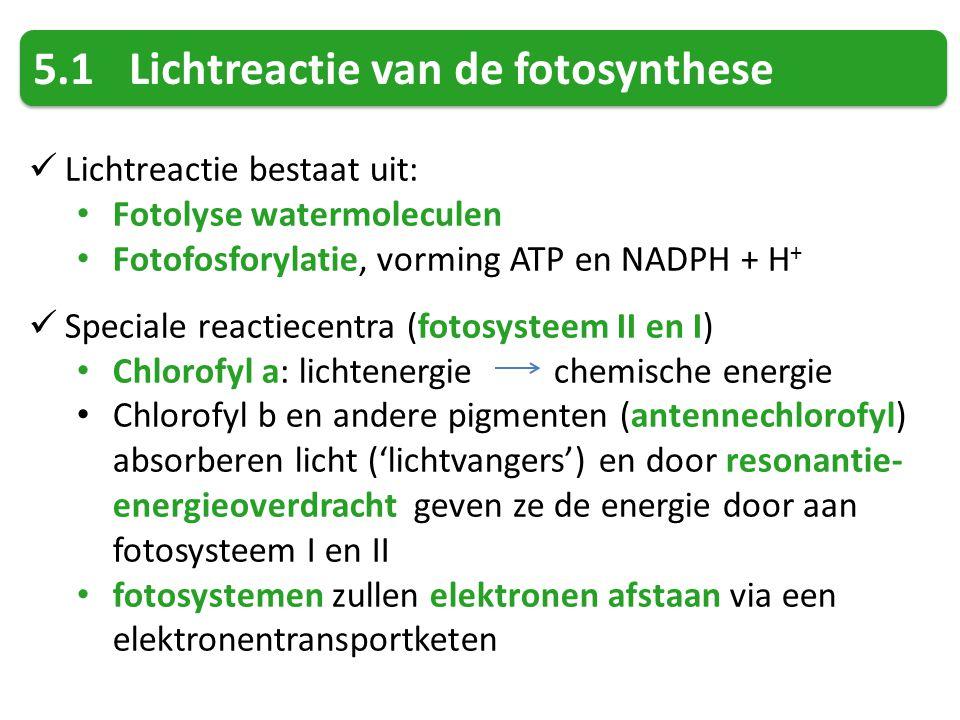 5.1 Lichtreactie van de fotosynthese