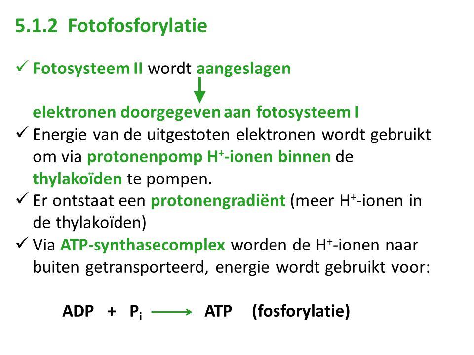 5.1.2 Fotofosforylatie Fotosysteem II wordt aangeslagen