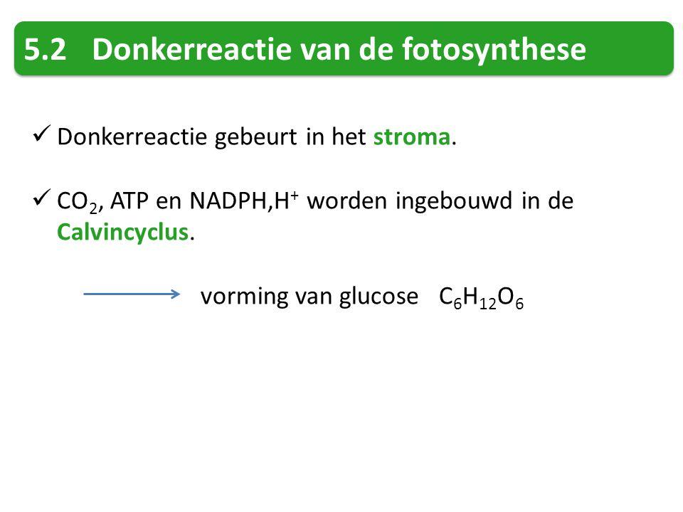5.2 Donkerreactie van de fotosynthese