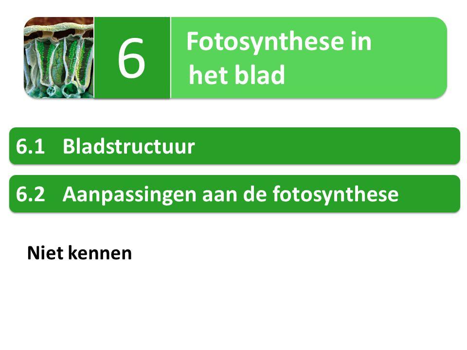6 het blad 6.1 Bladstructuur 6.2 Aanpassingen aan de fotosynthese