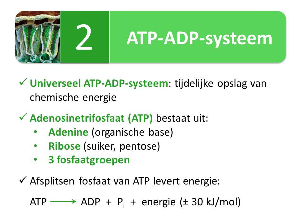 ATP-ADP-systeem 2. Universeel ATP-ADP-systeem: tijdelijke opslag van chemische energie. Adenosinetrifosfaat (ATP) bestaat uit: