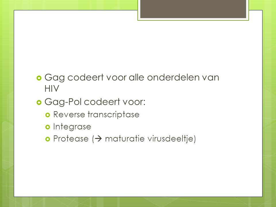 Gag codeert voor alle onderdelen van HIV Gag-Pol codeert voor: