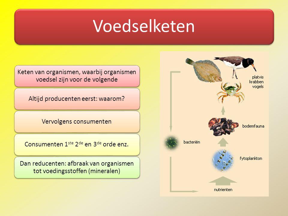 Voedselketen Keten van organismen, waarbij organismen voedsel zijn voor de volgende. Altijd producenten eerst: waarom
