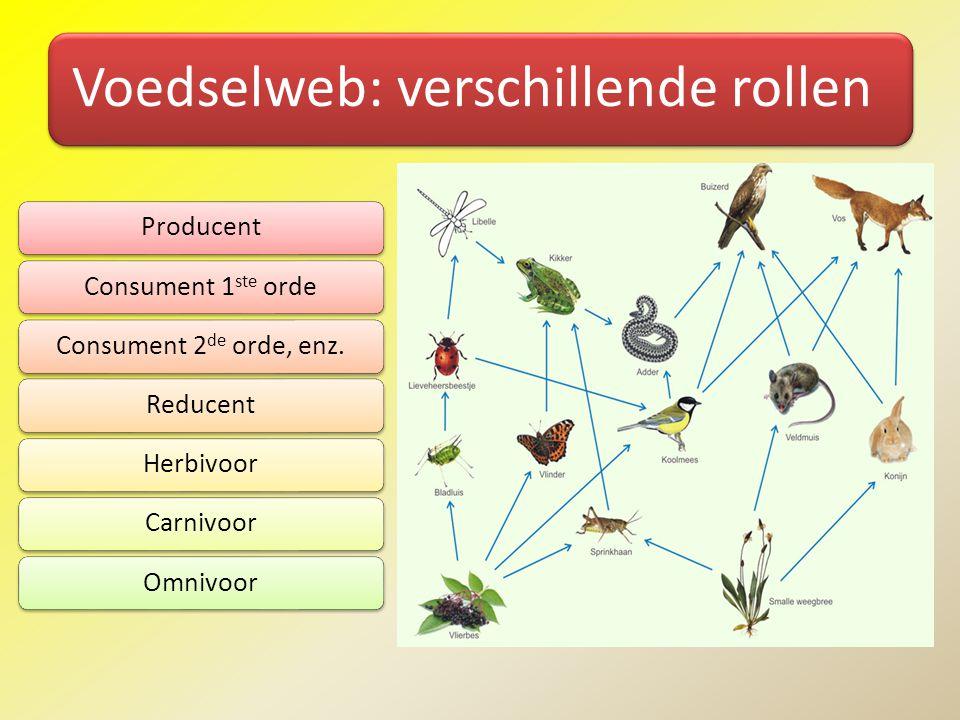 Voedselweb: verschillende rollen