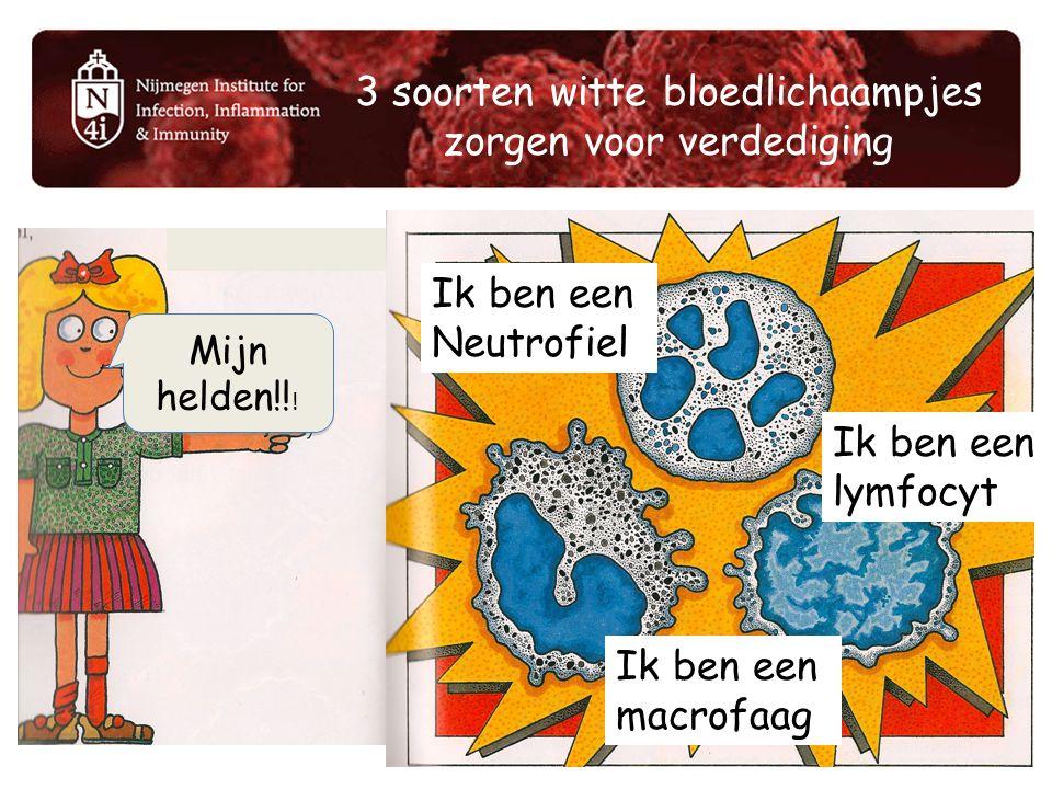 3 soorten witte bloedlichaampjes zorgen voor verdediging