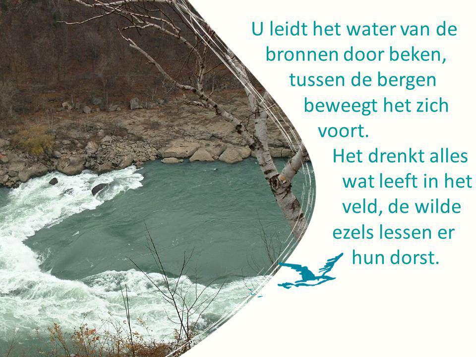 U leidt het water van de bronnen door beken, tussen de bergen. beweegt het zich. voort. Het drenkt alles.